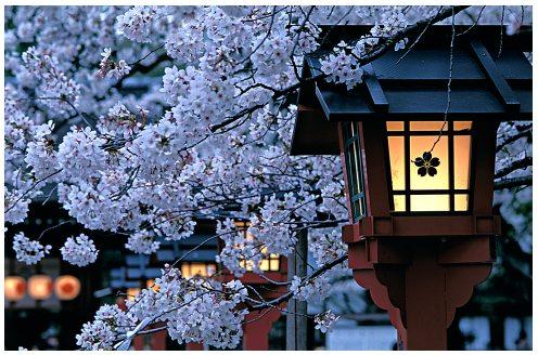 http://zaldyogawa.files.wordpress.com/2009/12/japan-sakura-005-2.jpg